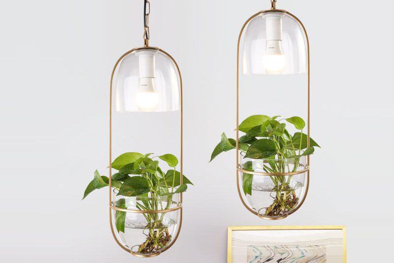 đèn thả trồng cây