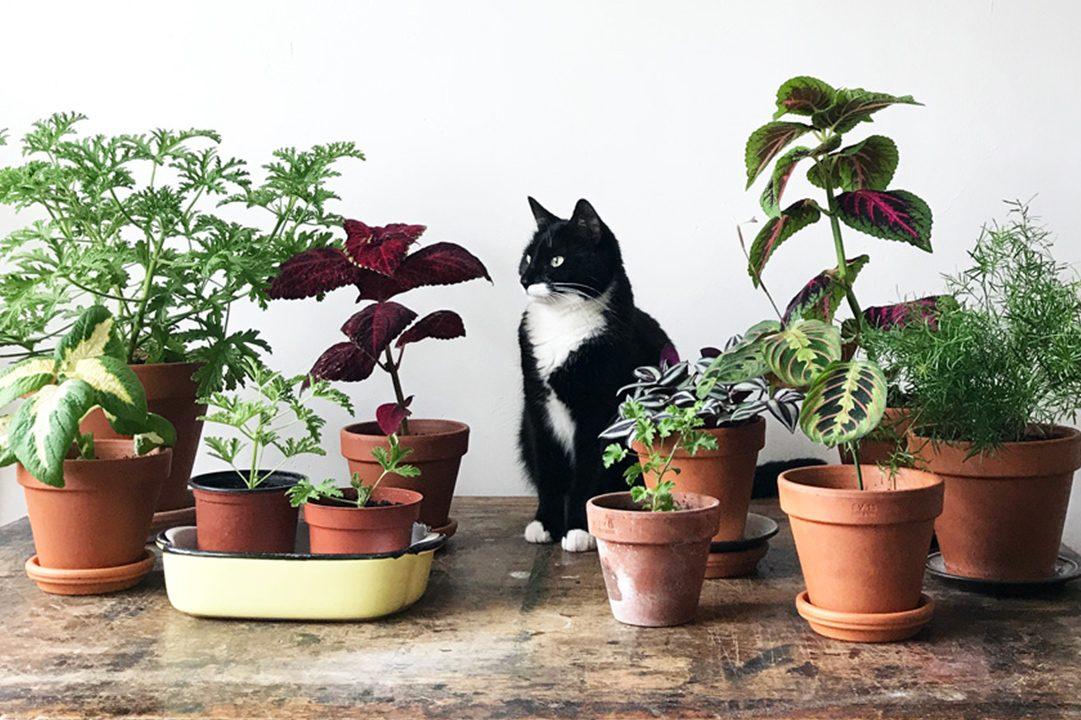 Cảnh báo 9 loại cây nội thất gây hại cho mèo cần tránh
