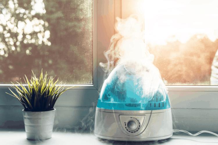 Máy tạo ẩm Monstera – 10 sản phẩm hàng đầu giúp Monstera ngày càng phát triển